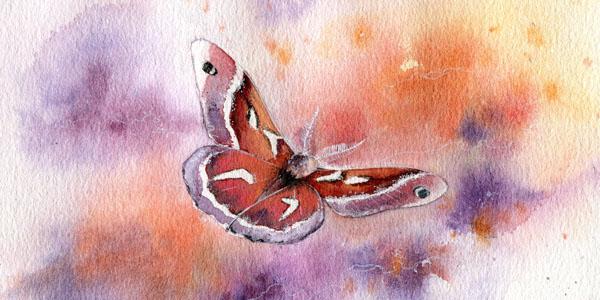 La Mariposa Женщина-Бабочка